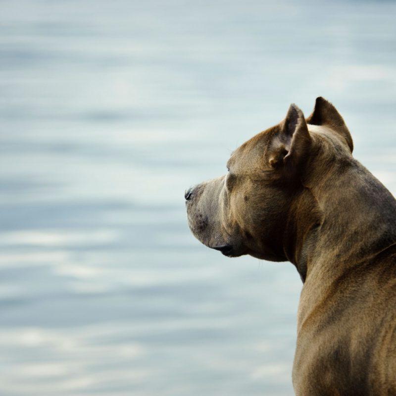 licencia animales peligrosos madrid